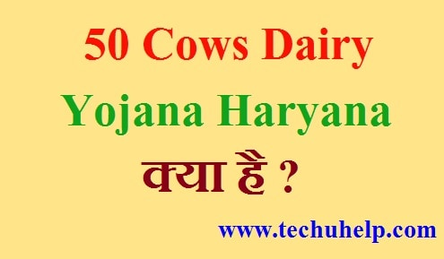 50 Cows Dairy Yojana Haryana क्या है