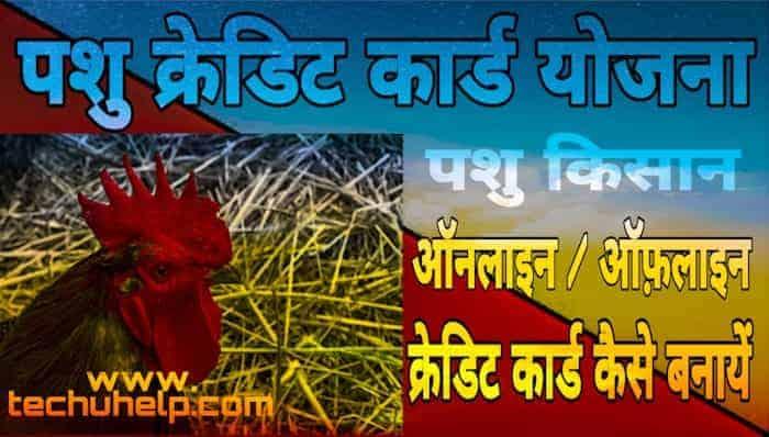 Pashu Kisan Credit Card Yojana in Hindi पशु किसान क्रेडिट कार्ड कैसे बनायें पूरी जानकारी हिंदी में